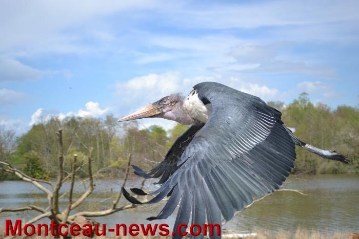 parc oiseaux 25041636