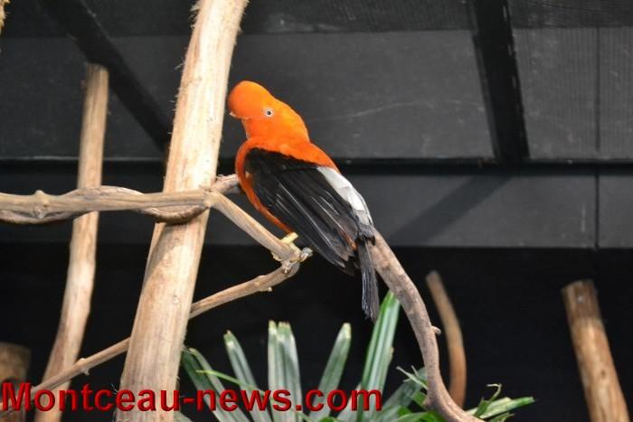 parc oiseaux 25041637