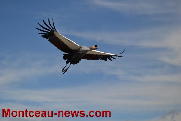 parc oiseaux 25041638