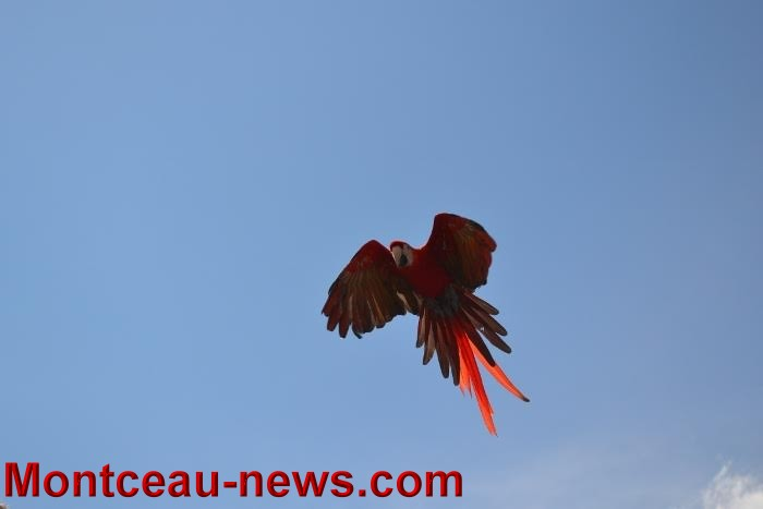 parc oiseaux 25041639