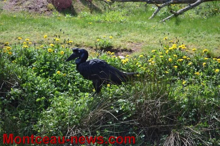 parc oiseaux 2504164