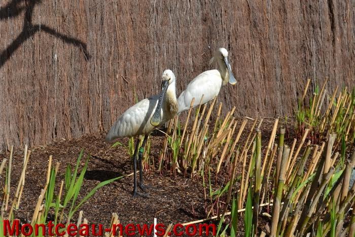 parc oiseaux 2504165