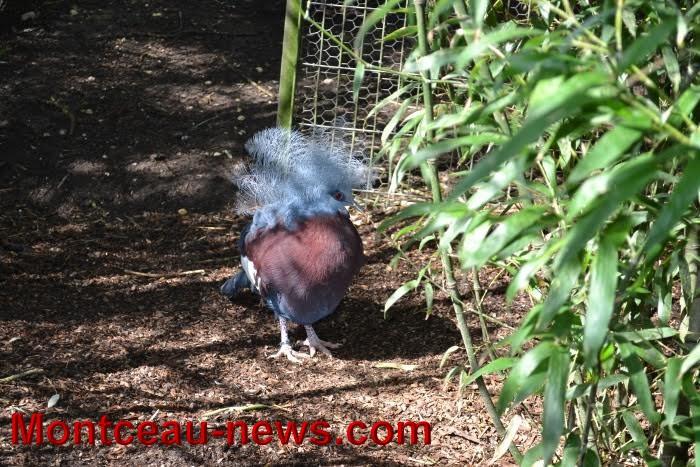 parc oiseaux 2504168