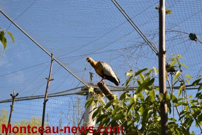parc oiseaux 2504169