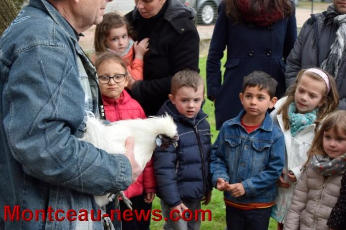 poule colette 12041611