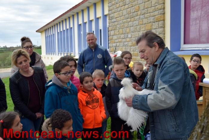 poule colette 12041612