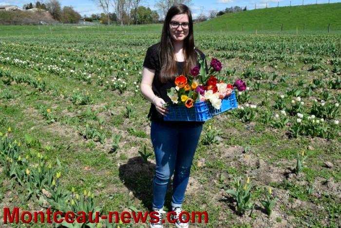 tulipe 1504166