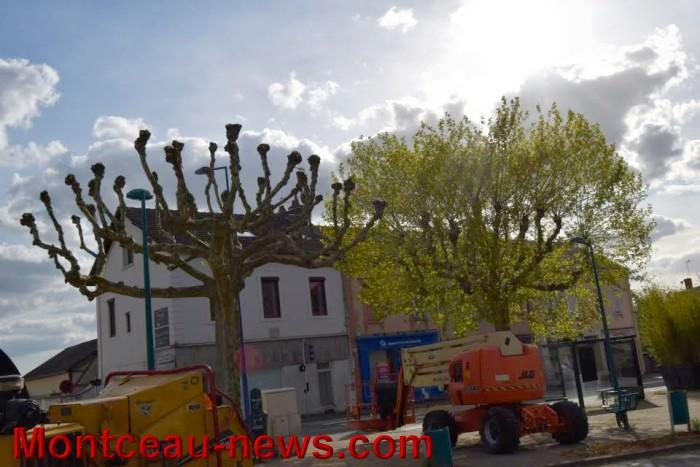 arbre 0405163