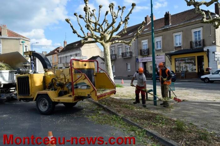 arbre 0405165