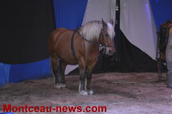 chevaux 06051618
