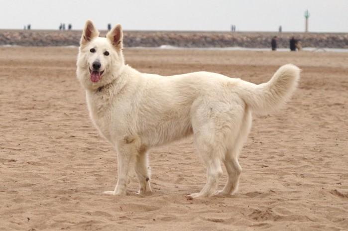 chien 2405163