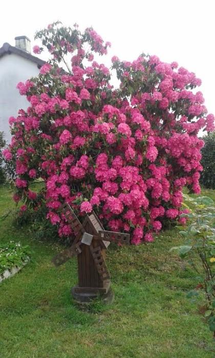 fleurs 1905162