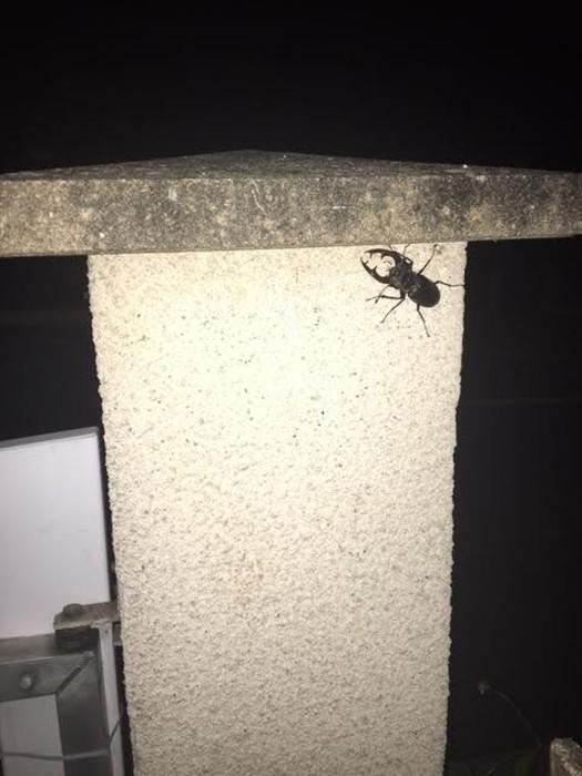 insecte 2605164