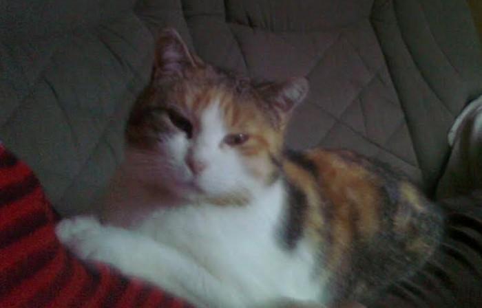 chat perdu 1206162