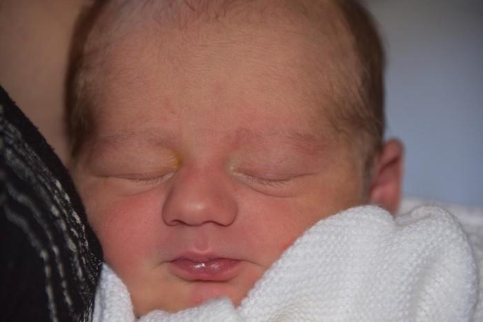 bebe nolan 1207166