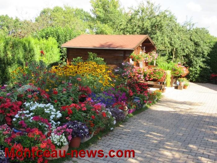 fleurs blanzy 14081617