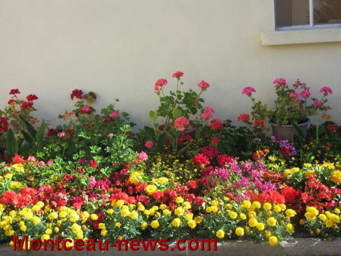 fleurs blanzy 14081620