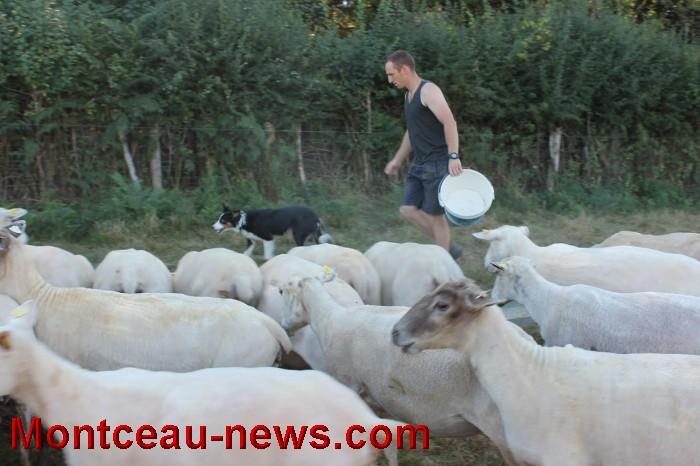 mouton-1109164