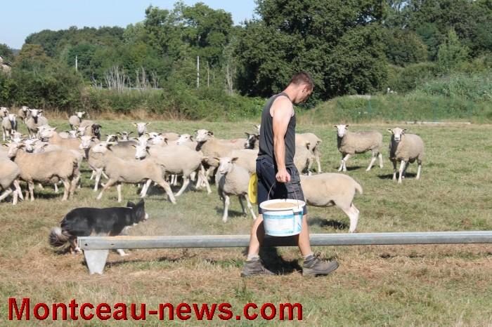 mouton-1109168