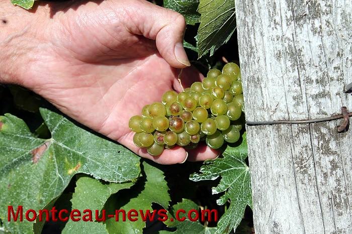 vigne-17-09-161
