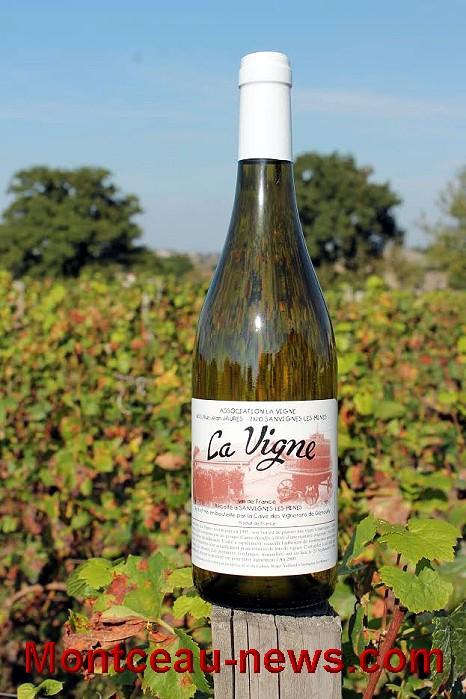 vigne-17-09-164