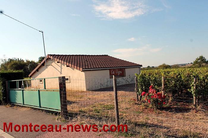 vigne-17-09-165