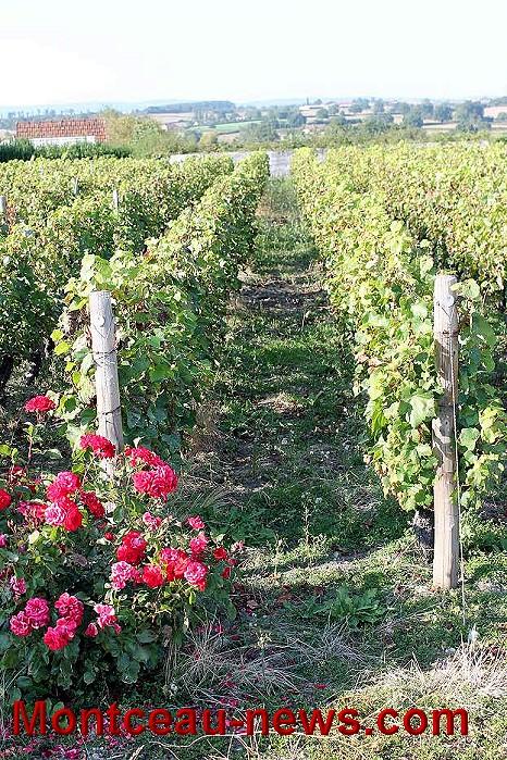 vigne-17-09-167