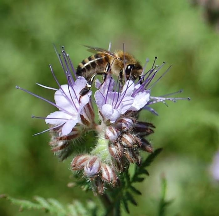 abeille-1410162