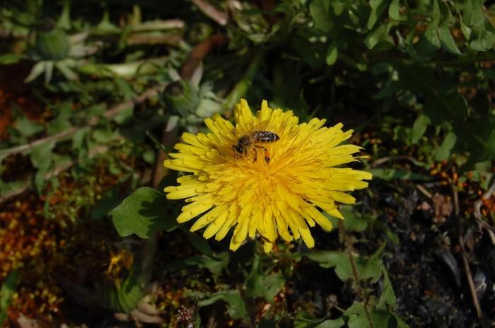 abeille-1410164