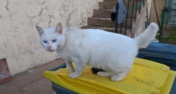 chat-trouve-2411162