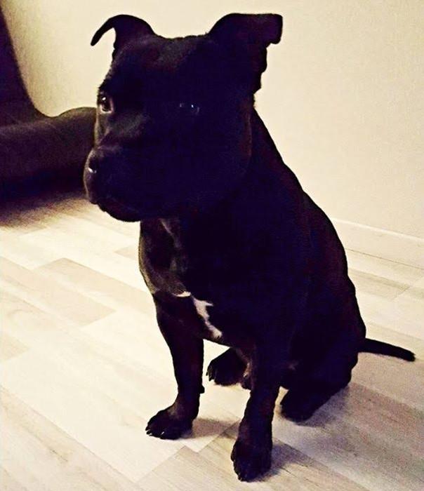 chien-perdu-2211163