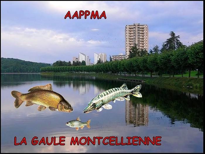 La Gaule Montcellienne