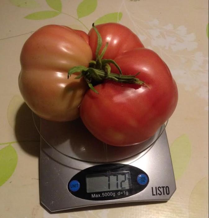 tomates 0808182