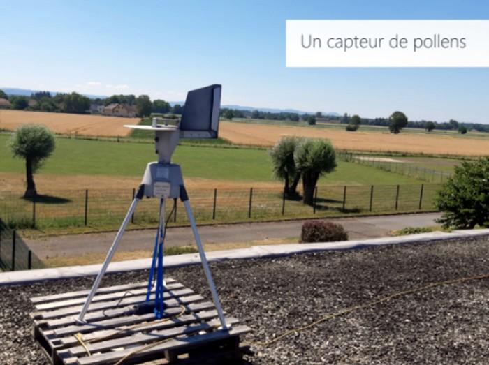 Les pollens d'ambroisie  sour surveillance en Bourgogne-Franche-Comté (Environnement)